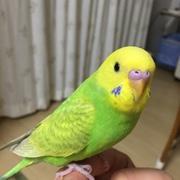 小鳥さんといっしょ