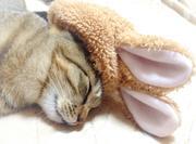 猫ちゃんねるNET