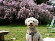 ラッキーと花咲く庭