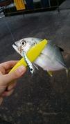 知多周辺ライトゲーム釣り日記