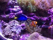 海水魚・珊瑚〜小さな小さな俺の海〜