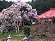 気まぐれな神社・仏閣めぐりぶらり旅の備忘録