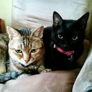 mye-mye☆キジトラ猫の部長+黒猫秘書さんのプロフィール