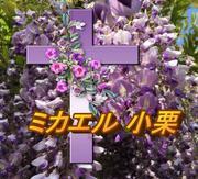 聖書の福音と癒やしと日常と!