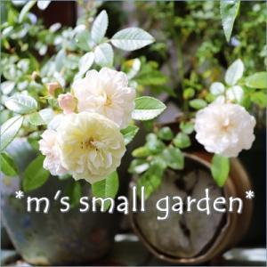 *m's small garden *
