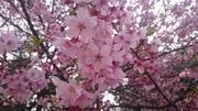 ♡〜桜みっちゃんの日記〜♡