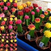 植物や園芸、雑貨など様々な話題情報ブログ