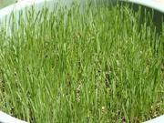 芝と庭の話