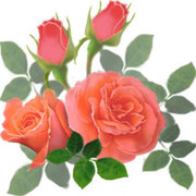 ✡。:*FlowerGarden*:。✡