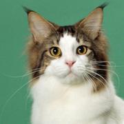 猫と緑のピュアエール