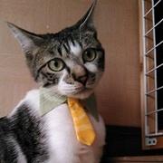 毎日が笑福絶倒!猫ニャンたちのキュン動画