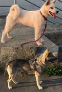 紀州犬 南方熊楠と白蓮