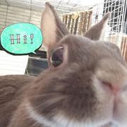 ウサギのラミと在宅OL食の日々