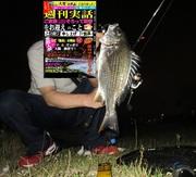 京都から電車で チニング!淀川 キビレ・チヌ(黒鯛)