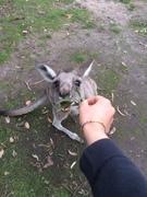 オーストラリア&NZワーホリ