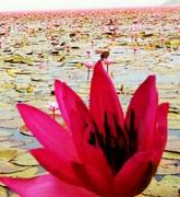 タイ,シラチャでのんびり暮らそ