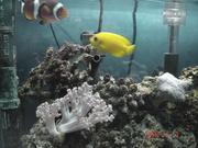 カトレアと熱帯魚のブログ