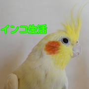 インコ生活〜飼い方・育て方の総合情報サイト