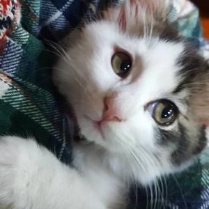 ねこパパ(ねこジロー)のブログ