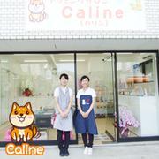 トリミングサロンCalineブログ