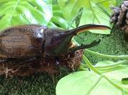 昆虫大好き息子を見守る母のブログ