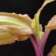 棒の植物ブログ