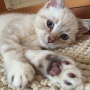 猫カフェ《猫の王様》のブログ…毎日がエブリディ笑