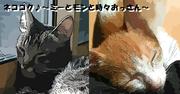 ネココク♪〜ミーとモンと時々おっさん〜