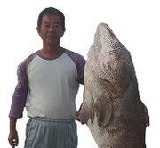 沖縄人気釣り船 真生丸 半日あり