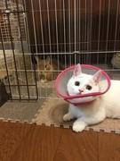 猫と兎と暮らす暖かい家