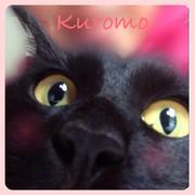 プチプラ庭づくり&DIY〜私が出会った猫との暮らし〜