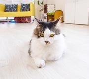 猫カフェブラン 保護猫写真展までの日々