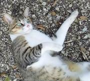 にゅうがん4な私と風太(日本猫)のららら田舎生活