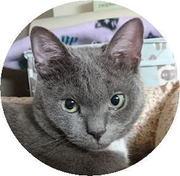 猫ごと〜預かり猫の日常