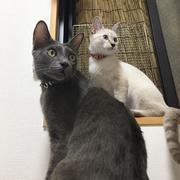 NALU KONA 散歩猫のブログ