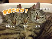 家猫ですが?