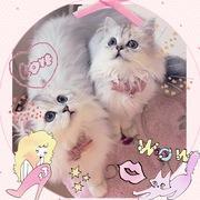 愛猫ajewel