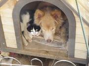 のら猫ナナと老犬フー