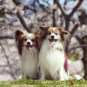 ロビンとルークと有のスローライフ 〜episode2〜