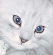 アメックスカードユーザー「ハンスケ」のブログ