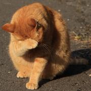 猫の写真のブログ。
