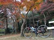 Ride Life!