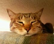 トラ猫の適当なブログ