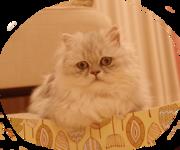 三十路独身女と猫のほのぼの生活