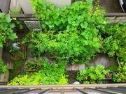 家庭菜園、やってる?