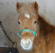 お馬さんてかわいいよね