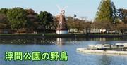 postmiyamiyaさんのプロフィール