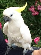 鳥生活 - Bird Life