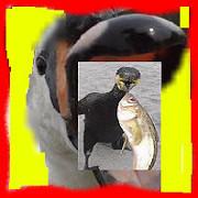 コブ白鳥と7羽の川鵜