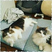 *みゃこはた編み*ときどき猫。